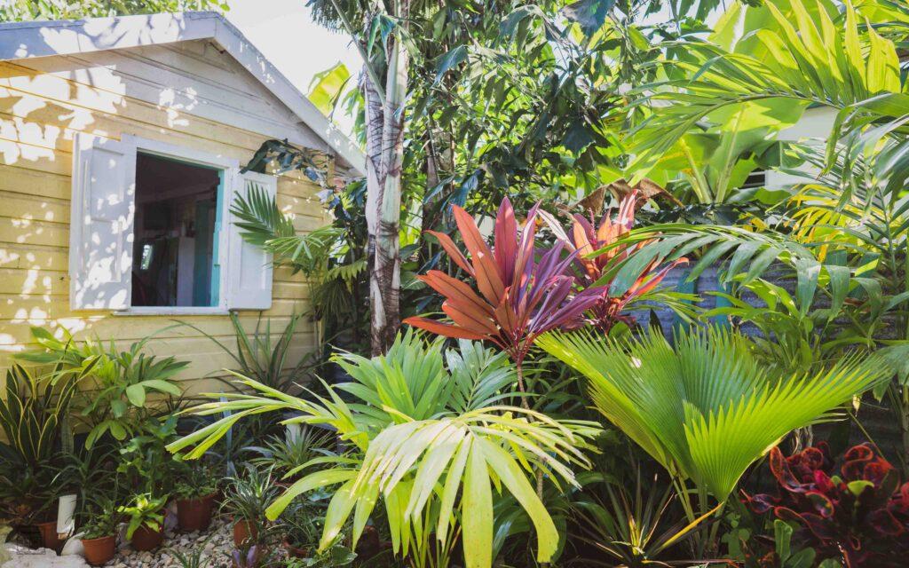 Exterior of Wag's Barbershop set amongst tropical plants